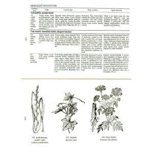 Gyógynövény-kiskáté