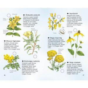Spotter's Guide - Kerti virágok