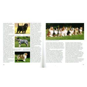 Fiatal kutyagazdik kézikönyve