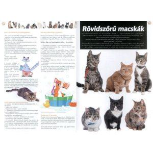 A Mi világunk - A macskák világa