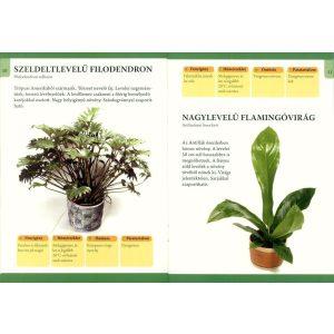 Otthonunk növényei 3. - Nagy levelű szobanövények