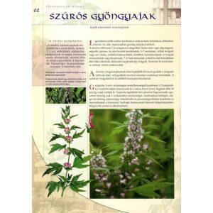 Környezetünk gyógyító növényei