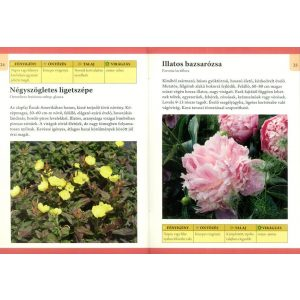 Otthonunk növényei 9. - Ágyásba való évelő virágok