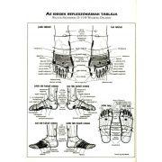 A láb- és talpmasszázs nagy könyve
