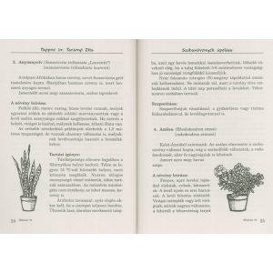 Szobanövények ápolása