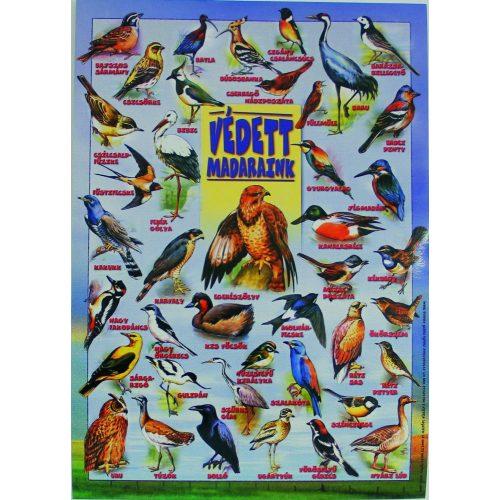 Szemléltető: Védett madarak