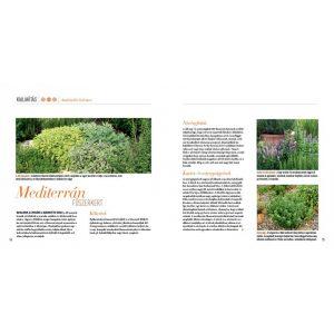 Konyhakerti fűszernövények