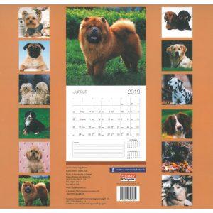 2019 naptár: Kutyák