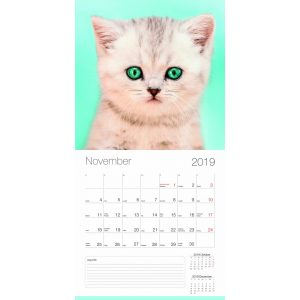 2019 naptár: Cicák 2019
