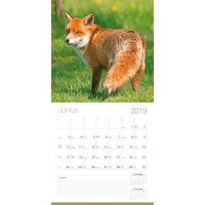 2019 naptár: Vadászat