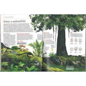 Növények és gombák - Természettudományi enciklopédia 6.