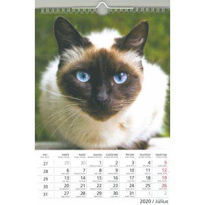 2020 naptár: Cicák
