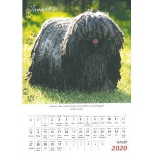 2020 Naptár: Kutyák