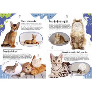 Cicafajták - A világ különleges macskái